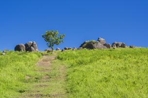 阿蘇 夏の押戸石の丘の写真素材 [FYI04926364]