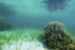 能登島の海藻の写真素材 [FYI04926579]