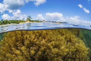 能登島の海藻、半水面の写真素材 [FYI04926599]