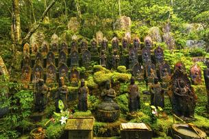 夏の三滝寺(広島県広島市)の写真素材 [FYI04927116]