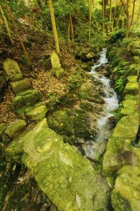 夏の三滝寺(広島県広島市)の写真素材 [FYI04927118]
