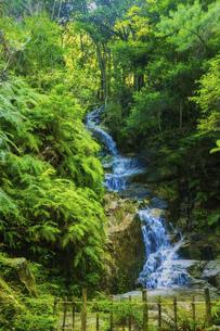 夏の三滝寺,駒が滝(広島県広島市)の写真素材 [FYI04927121]