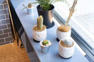 窓辺に並べられた植物の鉢の写真素材 [FYI04927132]