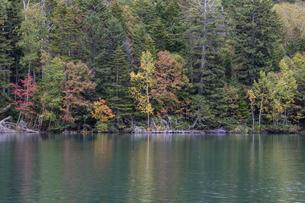 静かな湖の秋の始まり オンネトー湖の写真素材 [FYI04928110]