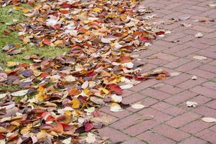 秋の落ち葉とレンガの道の写真素材 [FYI04928128]