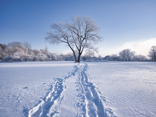 雪原の足跡の写真素材 [FYI04928264]