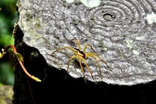 蜘蛛の写真素材 [FYI04928681]