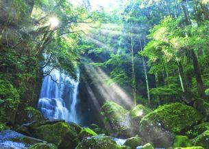 桑ノ木の滝(和歌山県新宮市)の写真素材 [FYI04928692]