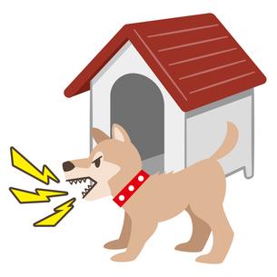 犬小屋の前で吠える犬のイラストレーションのイラスト素材 [FYI04928888]
