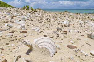 砂浜の化石と言われる嘉弥真島のビーチに埋もれる無数のタカセガイの写真素材 [FYI04928897]