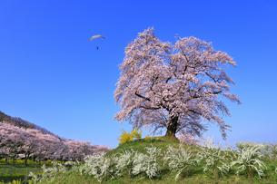 白石川千桜公園の写真素材 [FYI04929016]
