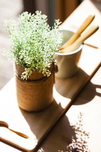 窓辺に置かれた観葉植物の写真素材 [FYI04929203]