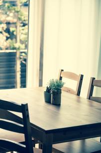 ダイニングテーブルに置かれた観葉植物の写真素材 [FYI04929205]