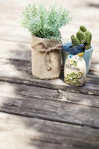 ウッドデッキに置かれた観葉植物とサボテンの写真素材 [FYI04929206]