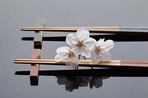 桜と箸の写真素材 [FYI04929255]