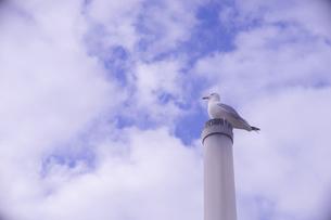 スペイン ガリシア地方の漁港の街ビーゴの公園 - 煙突に留まったカモメの写真素材 [FYI04929433]