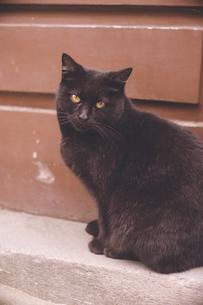 ポルトガル ポルト歴史地区の野良猫の写真素材 [FYI04929438]