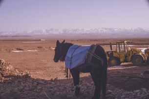 ロバとモロッコ ティネリール近郊トドラ渓谷の絶景の写真素材 [FYI04929465]
