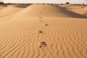モロッコ メルズーガ サハラ砂漠砂丘の足跡の写真素材 [FYI04929517]