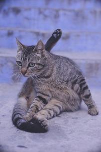 モロッコの人気観光地シェフシャウエン旧市街青の街の猫の写真素材 [FYI04929559]