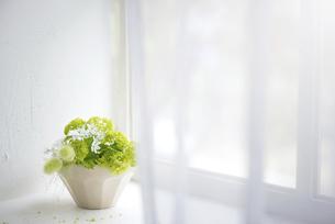 明るい窓辺の植物の写真素材 [FYI04929833]