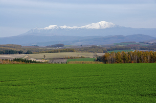 緑の草原と冠雪の山並み 大雪山の写真素材 [FYI04930135]