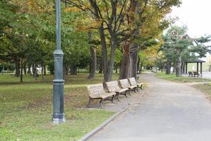秋の公園のベンチの写真素材 [FYI04930141]