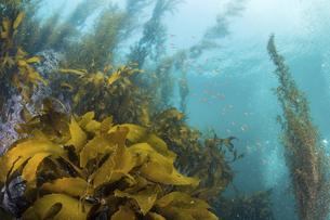 海藻の繁茂の写真素材 [FYI04931115]