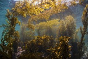 海藻の繁茂の写真素材 [FYI04931124]