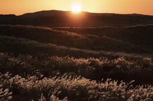 夕日とススキの写真素材 [FYI04933180]