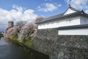 桜咲く霞城公園の写真素材 [FYI04937019]