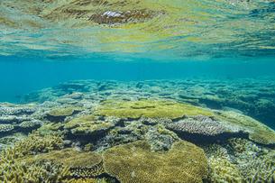 石西礁湖の美しい海とテーブルサンゴの写真素材 [FYI04938107]