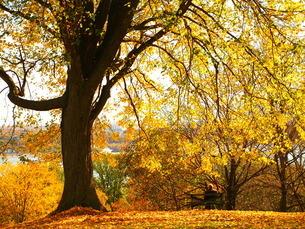 カナダの秋の紅葉の写真素材 [FYI04938913]