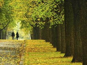 ロシアのモスクワ大学近くの秋の並木の写真素材 [FYI04938919]