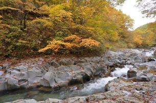 中津川渓谷の写真素材 [FYI04938953]