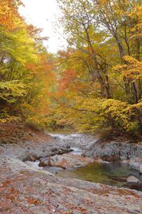 中津川渓谷の写真素材 [FYI04938955]