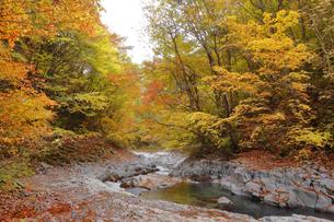 中津川渓谷の写真素材 [FYI04938957]