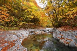 中津川渓谷の写真素材 [FYI04938959]