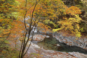 中津川渓谷の写真素材 [FYI04938960]