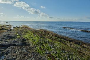 隆起した海岸の岩場に藻が、雲と水平線の写真素材 [FYI04939084]