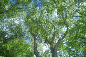 森と青空の写真素材 [FYI04939645]