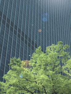 太陽光とビルと木の写真素材 [FYI04940655]