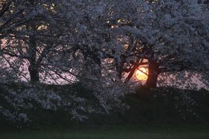 春の夕暮れの写真素材 [FYI04940818]