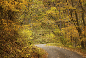 秋の山道の写真素材 [FYI04941147]