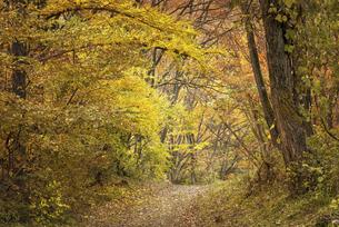 秋の山道の写真素材 [FYI04941149]