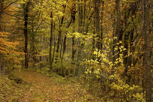 秋の山道の写真素材 [FYI04941151]
