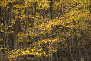 秋の木々の写真素材 [FYI04941153]