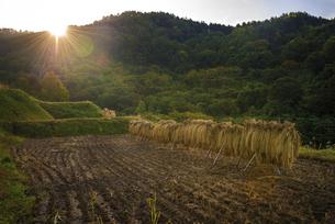 秋、収穫後の田園の写真素材 [FYI04941176]