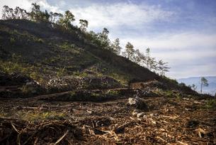 伐採された森の写真素材 [FYI04941205]