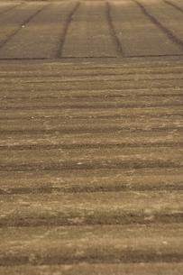 整然と整地され縞模様ができた畑の光景の写真素材 [FYI04941952]